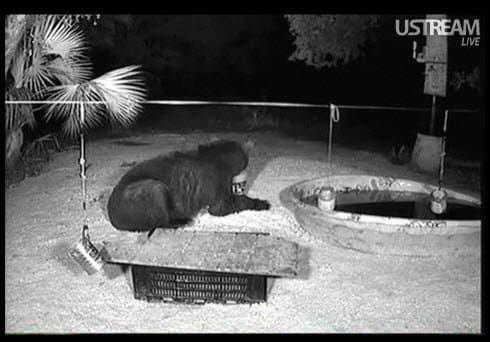 Florida Live Wildlife Camera Streaming Wildlife Cam