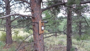 HD surveillance wildlife camera with motion detector