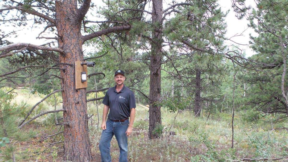 wildlife surveillance camera with motion detector